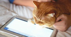Cat looking at tablet